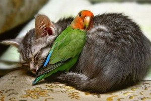 bird & cat friends